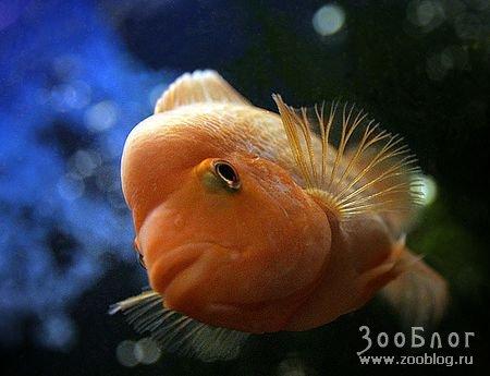Подборка ярких красивых рыбок (5 фото)
