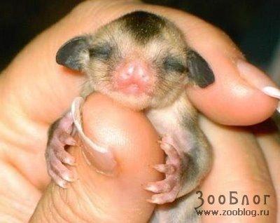 Маленькие зверьки (19 фото)