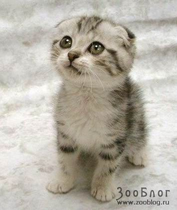 И снова потешные кошки (7 фото)