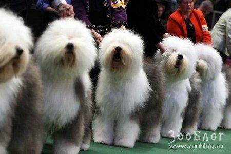 Собачьи прически и стрижки (15 фото)