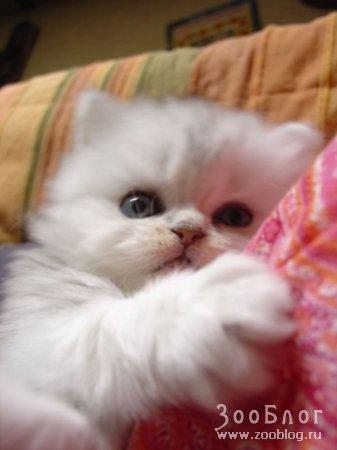 Подборочка милых кошек