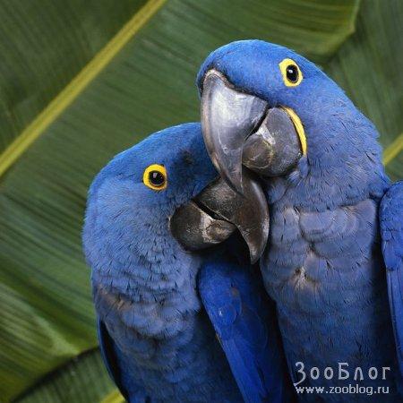 Красивые попугайчики (15 фото)