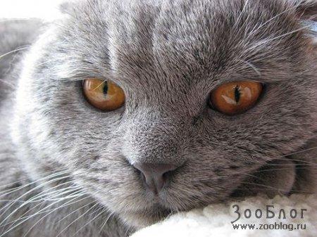 Мой кот Артем