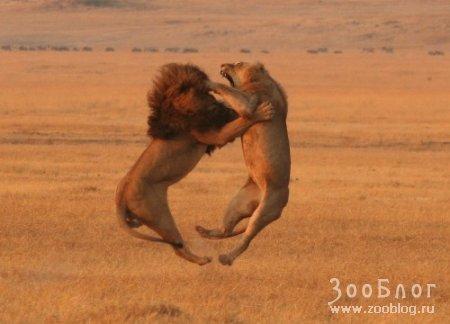 Танцы братьев наших меньших (10 фото)