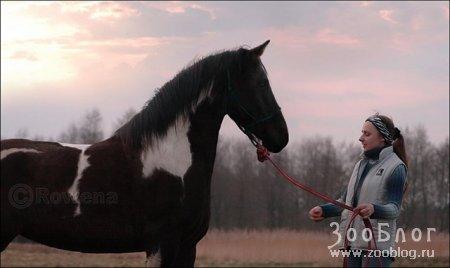 Лошади (10 фото)