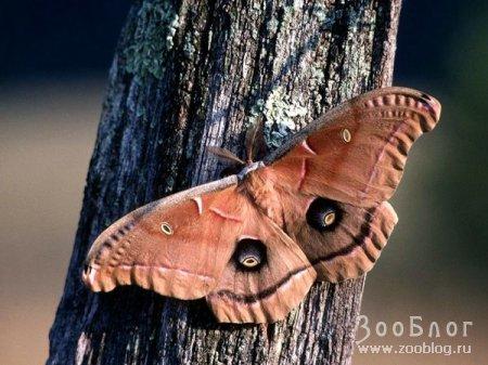 Бабочки (15 фото)