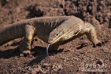 Ящерицы (13 фото)
