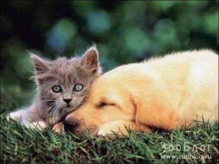 Кошачьи образы (14 фото)