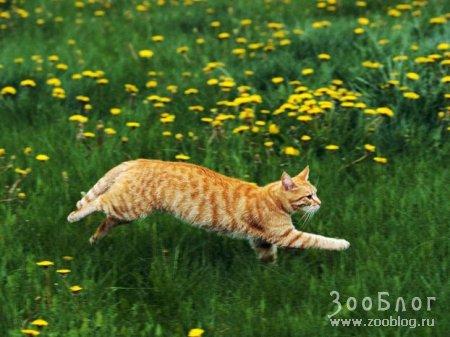 Рыжие коты(10 фото)
