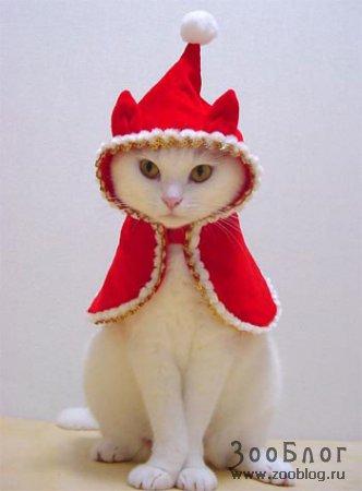 Кошкина одёжка, нна :) (12 фото)