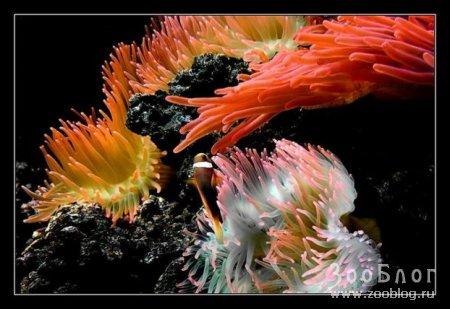 Обитатели подводного мира (12 фото)