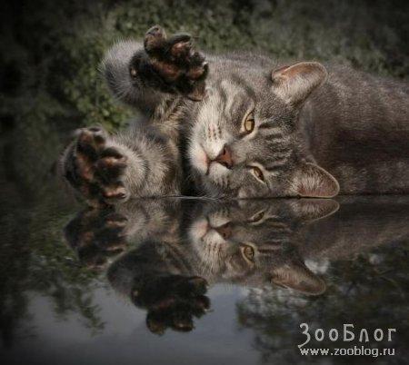 Красивые фото кошек (13 фото)