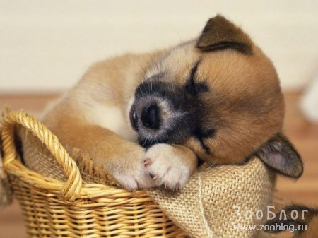 Спят усталые зверята (12 фото)