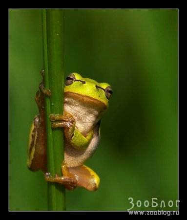 Лягушки (7 фото)