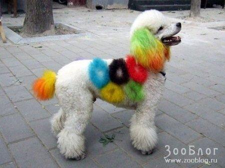 Гламурные собачки (15 фото)