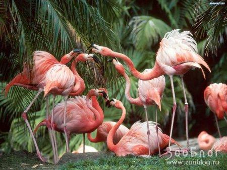 Розовый фламинго (8 фото)