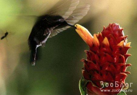 Колибри (9 фото)