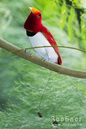 Экзотические птички (7 фото)