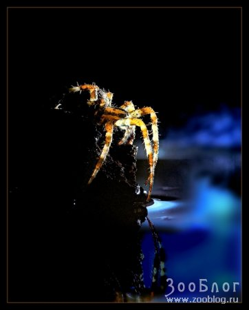 Фотографии с насекомыми от Leon Baas ч.1 (11 фото)