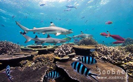 Хищные акулы ч.1 (13 фото)
