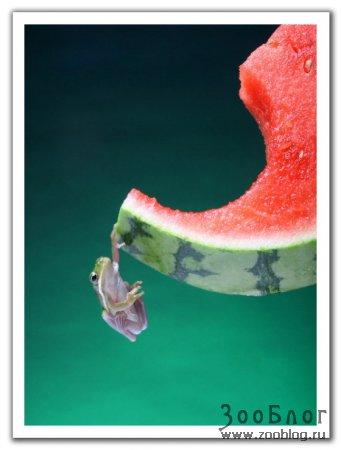 Лягушата (9 фото)