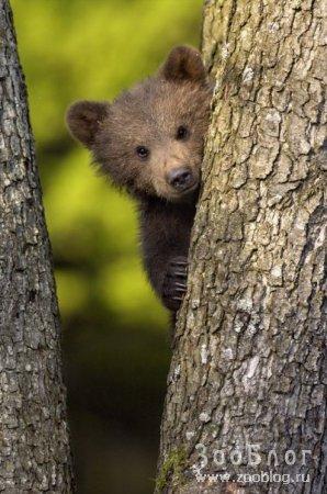Медвежата (3 фото)