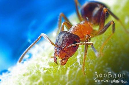 Фотографии с насекомыми от Leon Baas ч.2 (11 фото)
