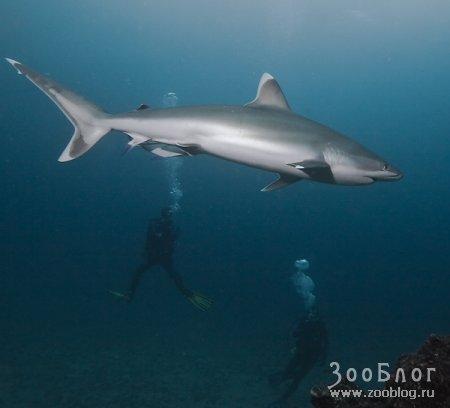 Хищные акулы ч.2 (14 фото)