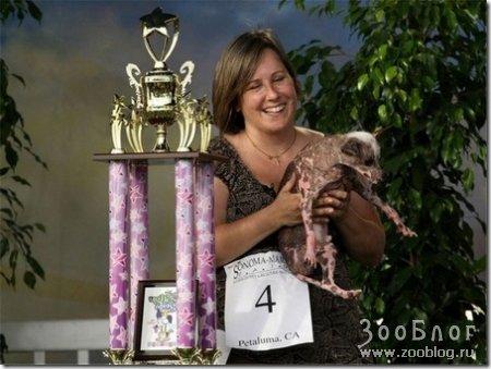Самая уродливая собака - 2008