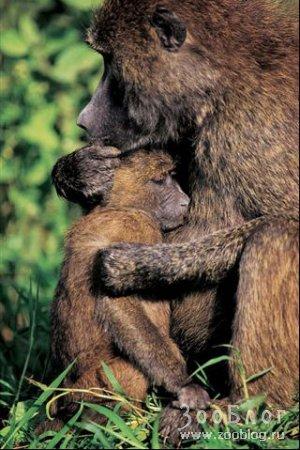 В мире животных. Лучшие фото 2007 (17 фото)
