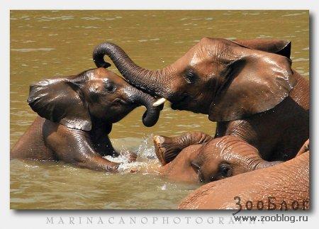 Волшебный мир дикой природы (43 фото)