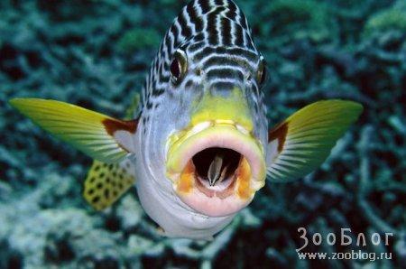 Обитатели подводного мира Дэвида Дюбиле