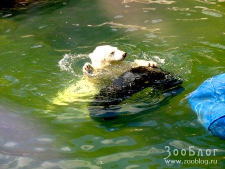 Питомцы петербургского зоопарка