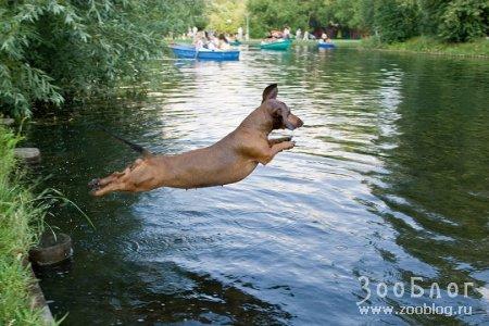 Летающая водоплавающая такса