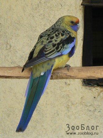 Разнообразие попугаев