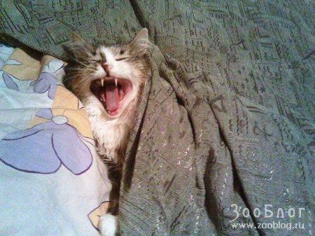 """Любимая кошка """"Персик"""""""