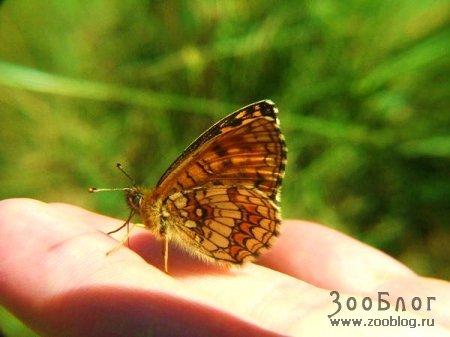 Бабочки (38 фото)