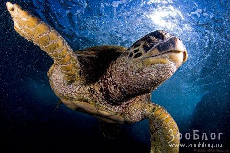 Подводный мир (12 фото)