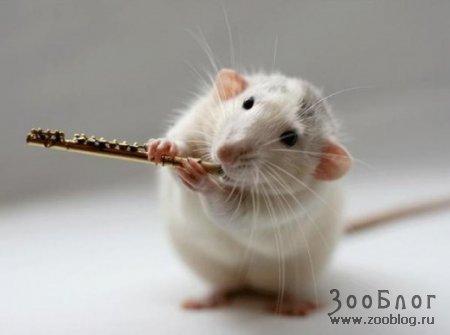 Мышки-музыканты