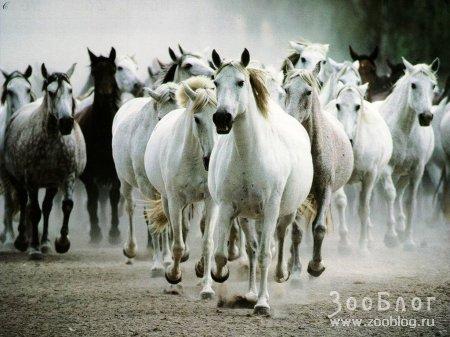 Лошадки (6 фото)