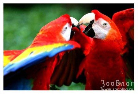 Радужные попугайчики (3 фото)