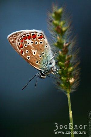 Крылатая красота