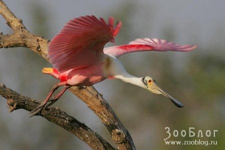 Розовый красавчик (6 фото)