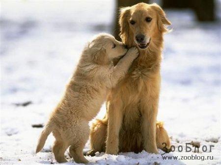Собачки =)
