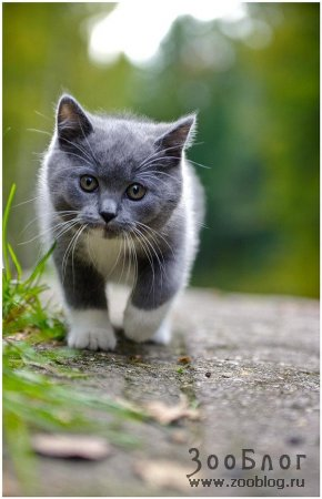Котёнок - маленький и милый малыш