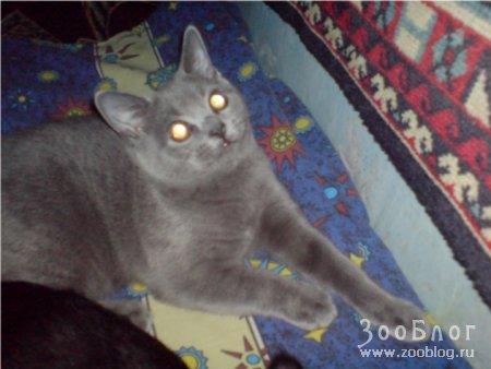Любимые кошки Ричард и Лаура