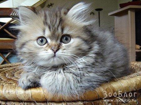 Забавные котята (6 фото)
