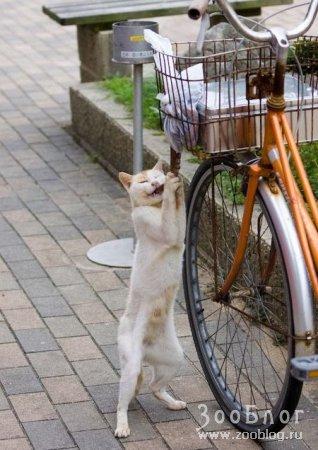 Кот завтракает осьминогом