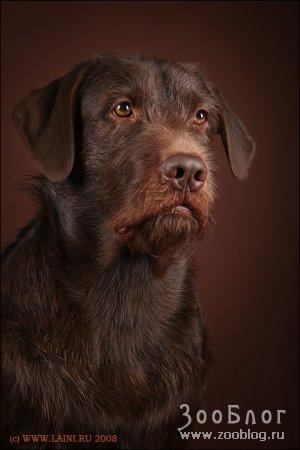 """""""Шоколадные"""" собаки"""
