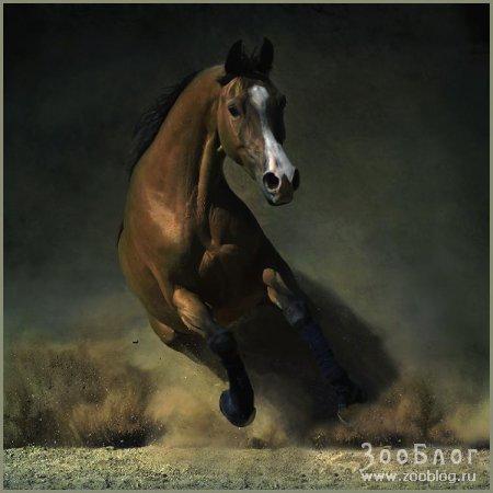 Лошади (17 фото)
